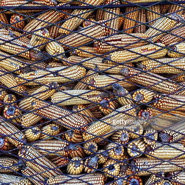 dried corncobs, croatia - larissa veronesi stock pictures, royalty-free photos & images