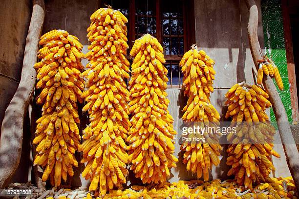 Dried corns