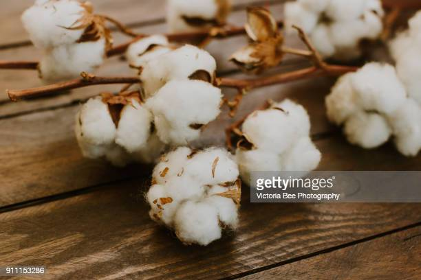dried cotton over wooden background - cotton stock pictures, royalty-free photos & images