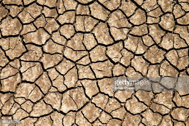 dried & cracked dirt - drought stock pictures, royalty-free photos & images