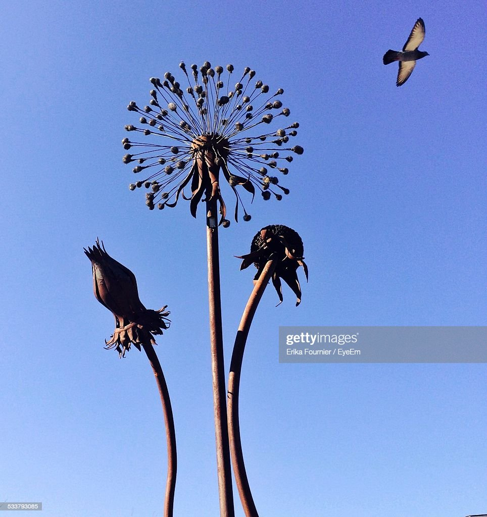 Dried Dandelion And Flying Bird : Foto stock