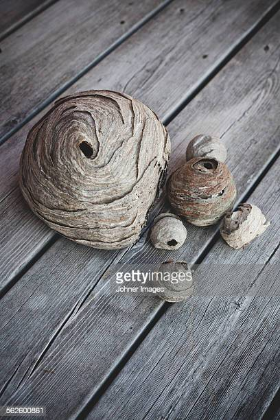 Dried decorations on wooden background