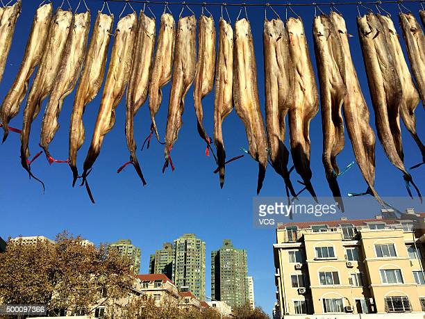 Dried fish are hung at a market on December 5 2015 in Dalian Liaoning Province of China Dalian welcomes harvest season of drying fish at the begining...