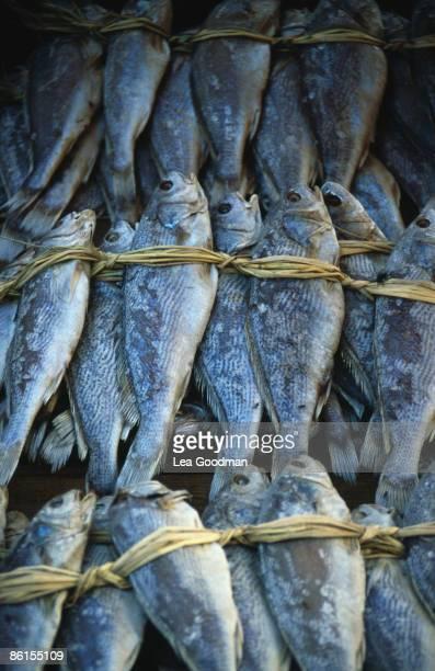 Dried fish at a market in Phuket Thailand 1985