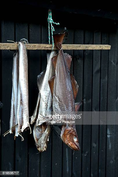 Dried fish hanging on the wall