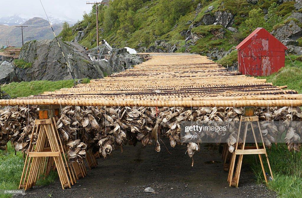 Dried fish heads : Stock Photo