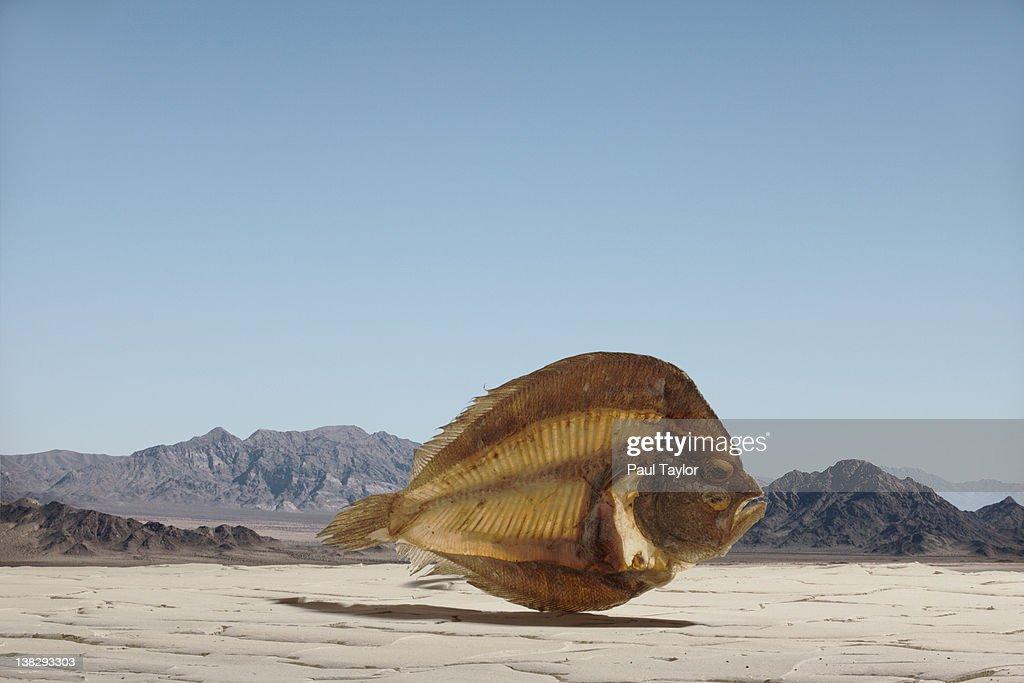 Dried Fish in Desert : Stock Photo