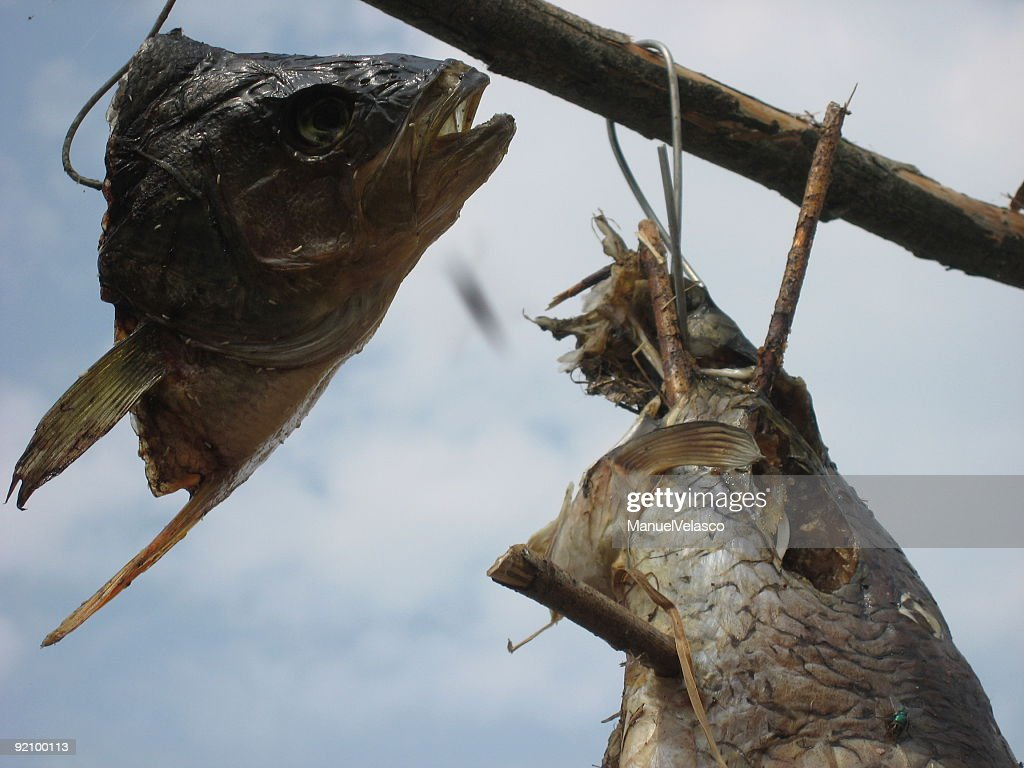 dried fish : Stock Photo