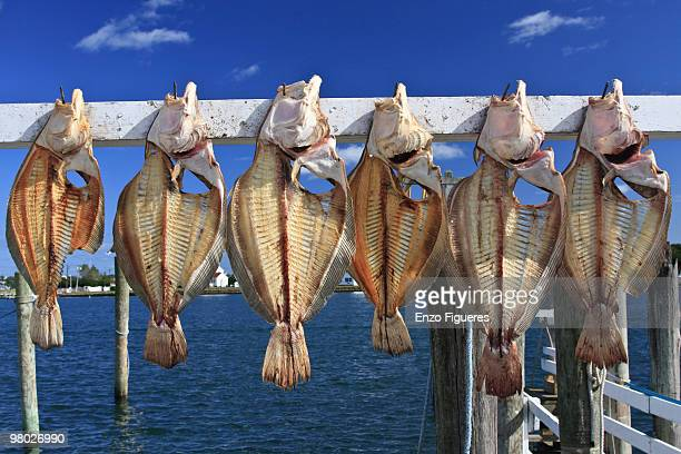 dried fish - 干物 ストックフォトと画像