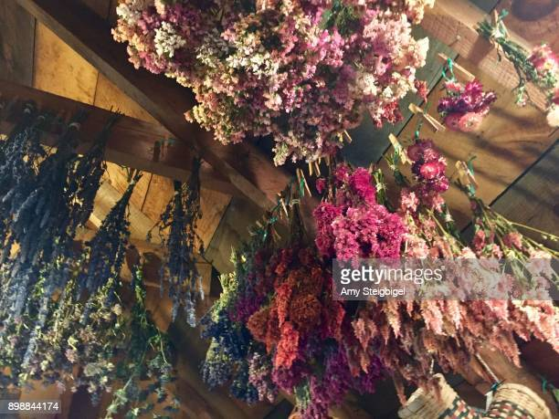 dried flower bouquets hang from ceiling - dried plant stock pictures, royalty-free photos & images