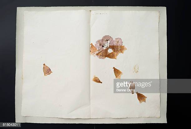 Dried flower petals on open book against black background