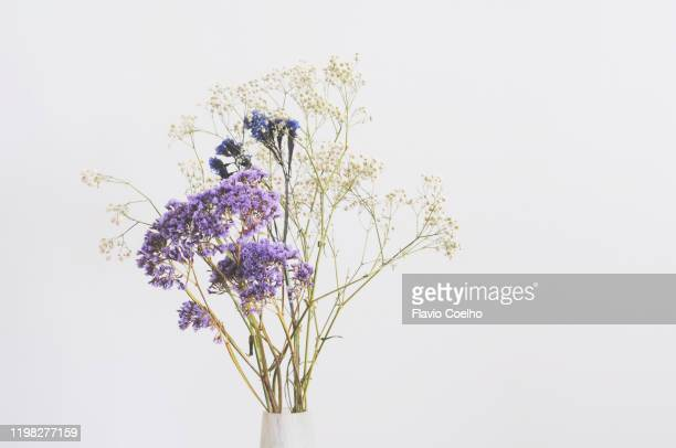 dried flowers bouquet - dried plant stock pictures, royalty-free photos & images