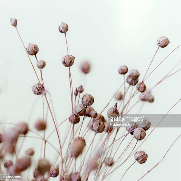 dried flowers - stilleven stockfoto's en -beelden