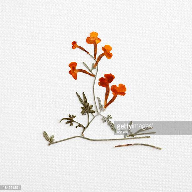dried flowers - jumanji: the next level stock pictures, royalty-free photos & images