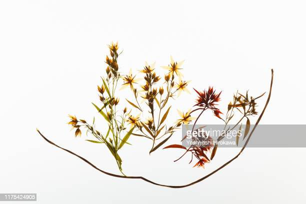dried flowers that color the four seasons - 優美 ストックフォトと画像