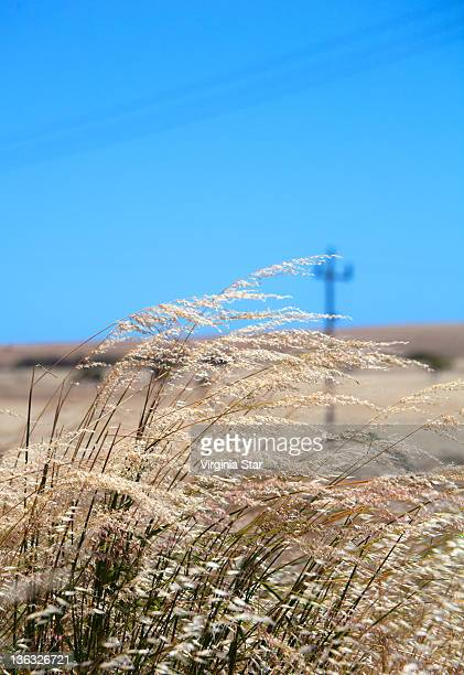 Dried grasses blowing