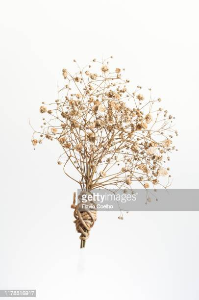 dried gypsophila flower bouquet - dried plant stock pictures, royalty-free photos & images