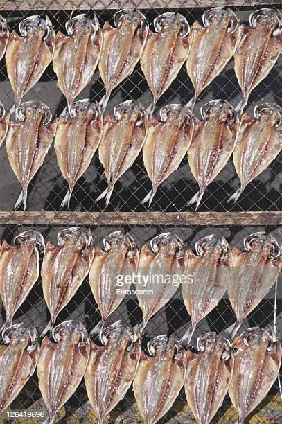 Dried Horse Mackerel