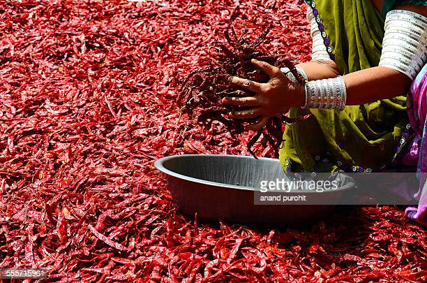 Dried hot red chillies in hand - Indian spice