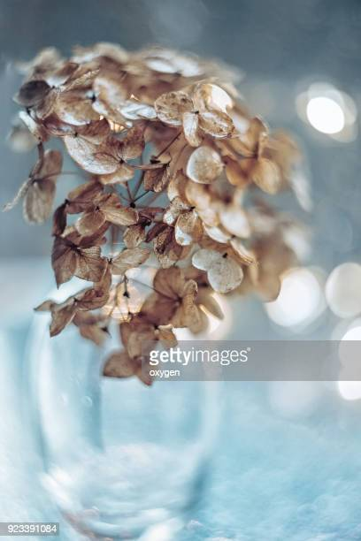 dried hydrangea flowers in glass bottle with bokeh background