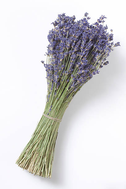 Dried Lavender Bunch, Elevated View Wall Art