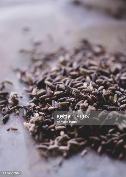 dried lavender - elena blume stock-fotos und bilder