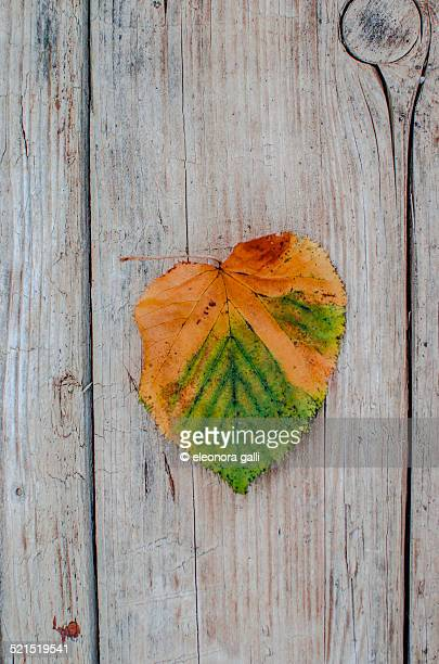 dried leaf in autumn - massa stock pictures, royalty-free photos & images