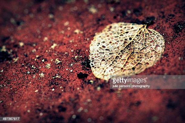 Dried leaf on red soil