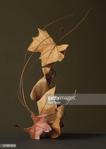 dried leaves in stack - seco fotografías e imágenes de stock
