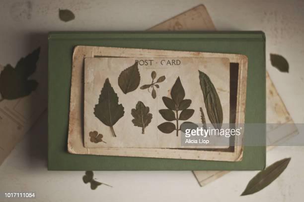 dried leaves - tagebuch stock-fotos und bilder