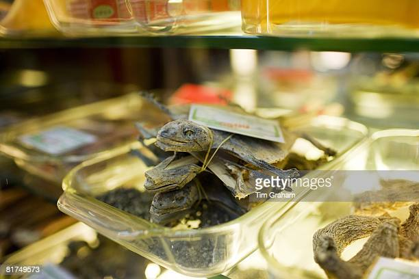 Dried lizards sold in a traditional Chinese medicine shop in Wangfujing Street Beijing China