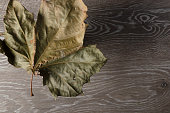 single dried maple leaf floats above