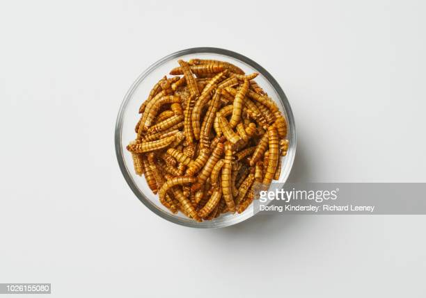 dried mealworms in a glass bowl - mealworm stock photos and pictures