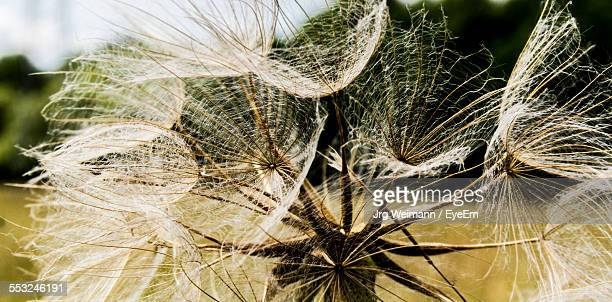 Dried Plant On Field