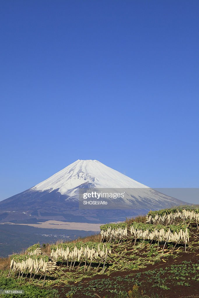 Dried radish and Mount Fuji, Shizuoka Prefecture : Foto de stock