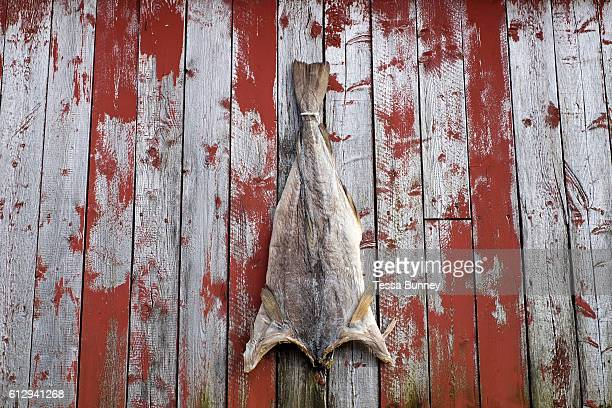 A dried salted cod on a redpainted Rorbu fishermans cabin on 24th August 2016 in the village of A Lofoten Norway The Lofoten islands are famous for...