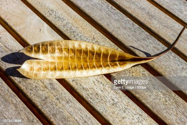 dried seed pod - fish x ray stock photos and pictures