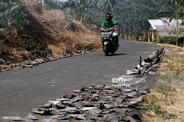Dried shark fins along the road of Talawan Bajo. The shark fins are taken from the caught sharks around the North Minahasa through traditional...
