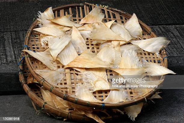 dried shark fins at market in china - provinz guangdong stock-fotos und bilder