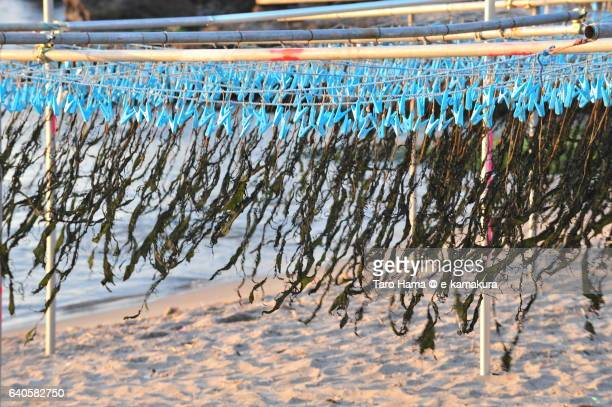 Dried soft seaweed swaying in the wind