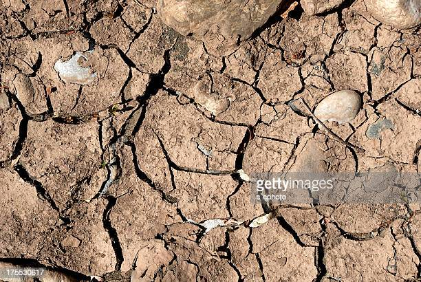 Dried Soil (Click for more)