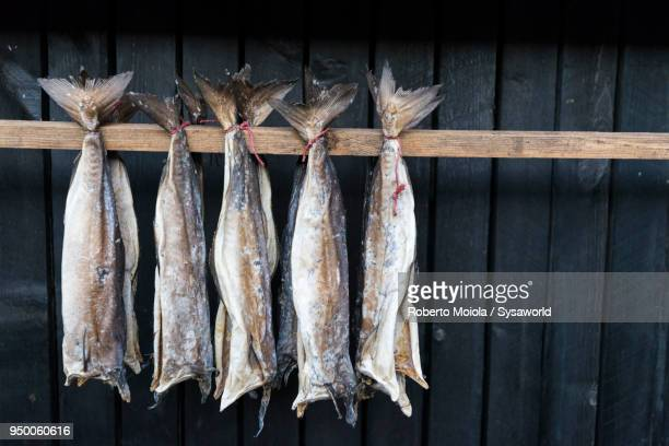 Dried stockfish, Faroe Islands