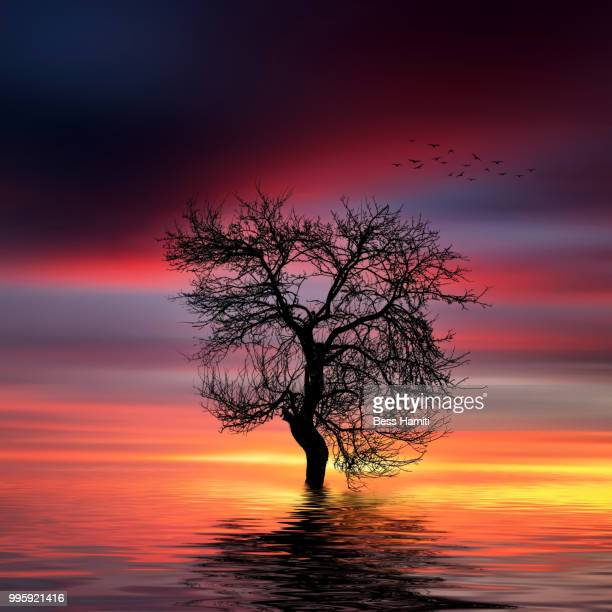 dried tree in the lake - dawn bess stock pictures, royalty-free photos & images