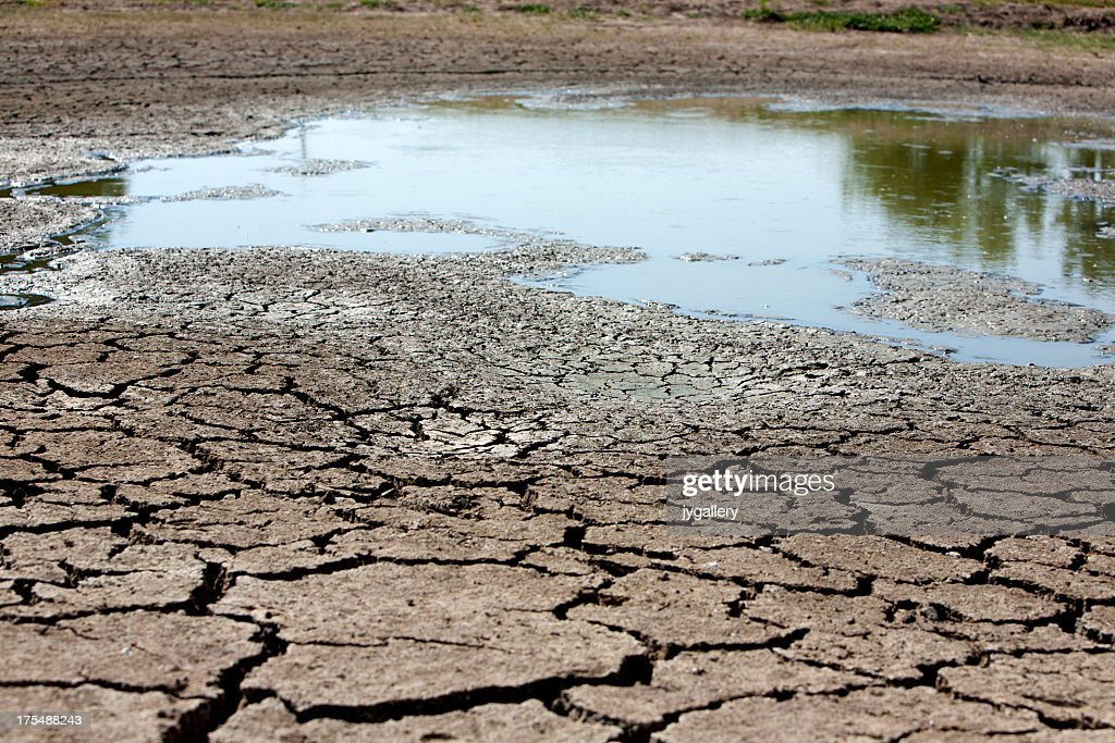 Dried up mud at a watering hole : Stock Photo