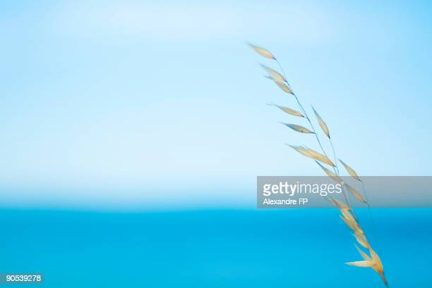 Dried vegetals and sea