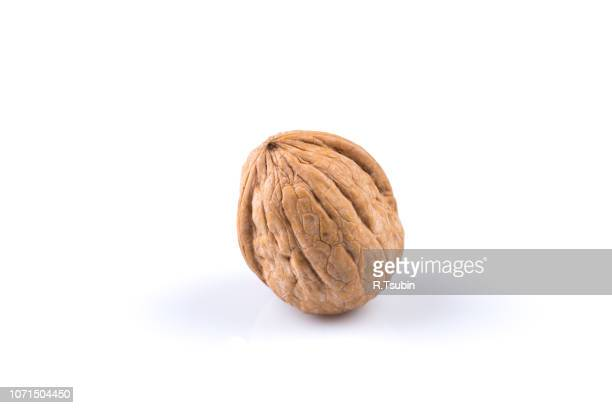dried walnut isolated on a white background - walnut stock pictures, royalty-free photos & images