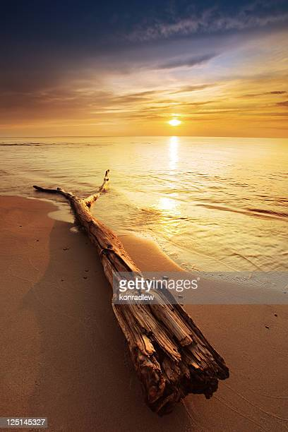 Drift Wood On The Beach During Colorful Sunset