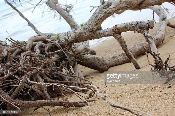 Driftwood and new leaf