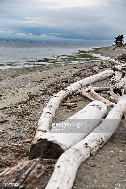 Treibholz und felsigen Strand bei STÜRMISCHER Tag ein