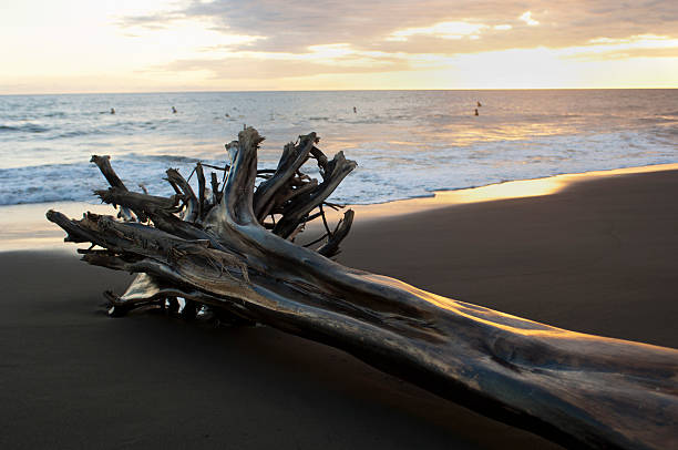 Driftwood and surfers on Playa Hermosa at sunset.